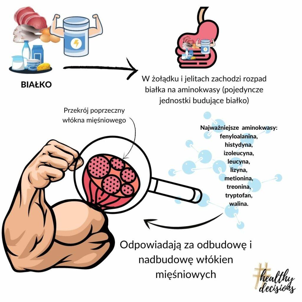 żywienie okołotreningowe budowa mięśni